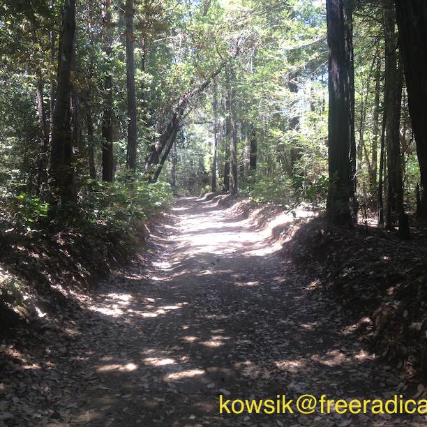 Richards Road Trail