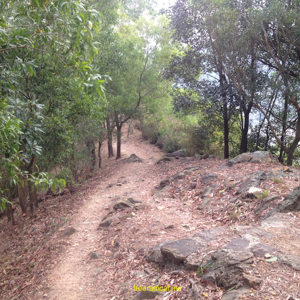 Single Track On Hok Tau Trail