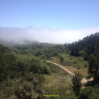 Foggy Waddell Creek Beach
