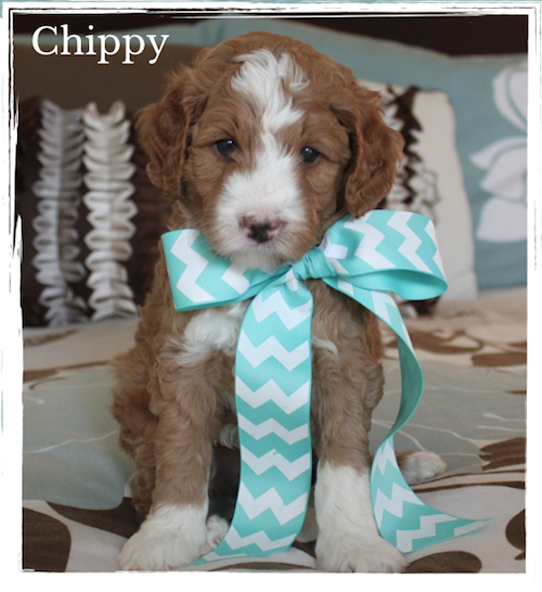 Chippy, Just 5 weeks old
